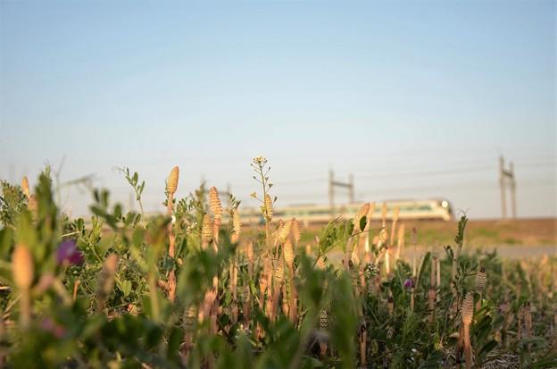 畦道の春リバティ