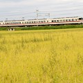 Photos: 東武350系臨時特急きりふり号