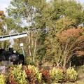 秋色の公園に佇むC58