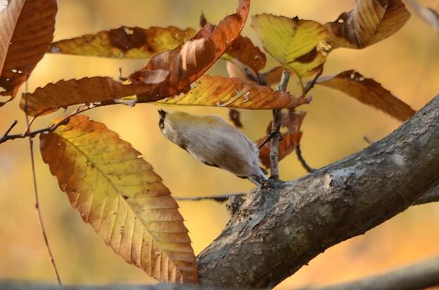 葉の裏に背伸び