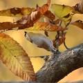 写真: 葉の裏に背伸び