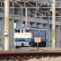 Photos: EF65 2096原色機 初撮影♪