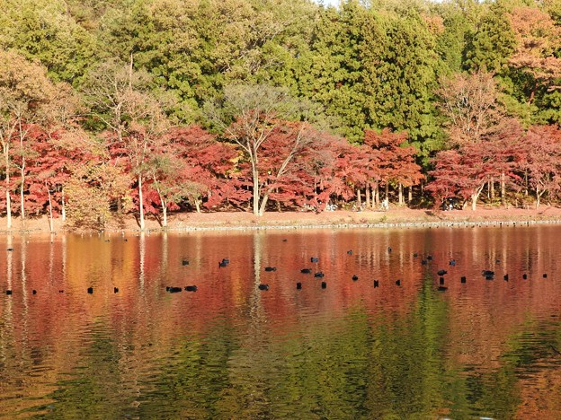井頭公園ボート池の紅葉
