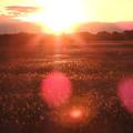 写真: 大晦日の夕陽