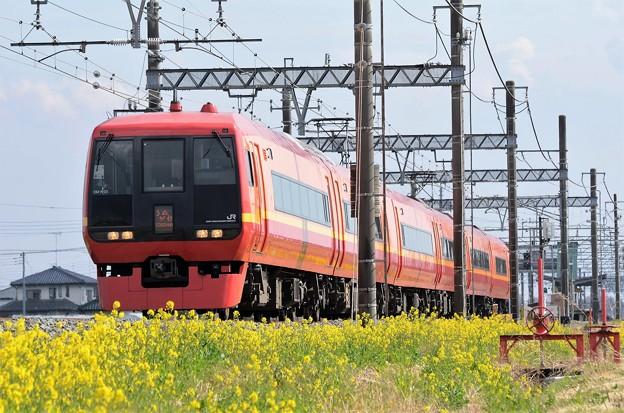 菜の花の東武日光線を行く赤い特急253系