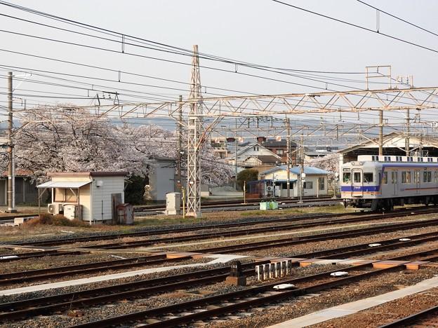 桜咲く南海和歌山市構内と7000系