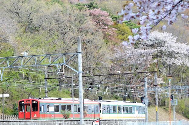 桜の鬼怒川公園を行く会津マウントエクスプレス号