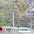 Photos: 桜の鬼怒川公園を行く会津マウントエクスプレス号