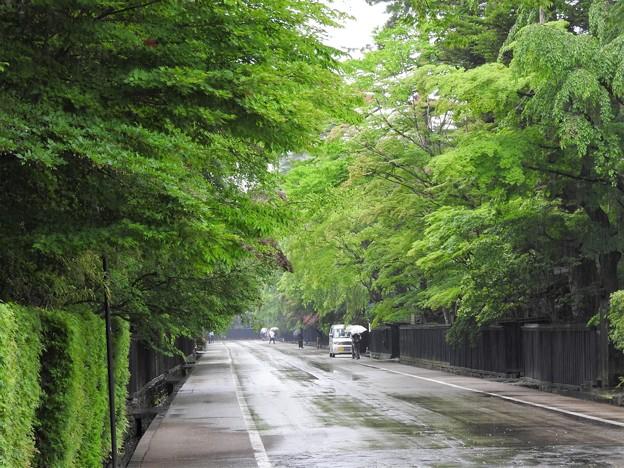 緑雨の角館武家屋敷通り