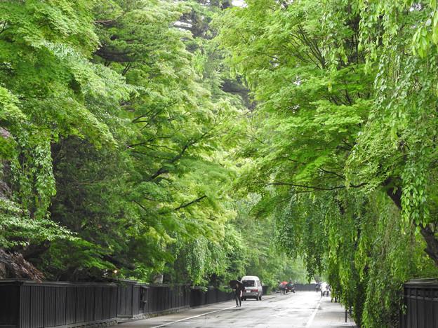緑雨の武家屋敷枝垂桜