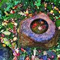 写真: 水に浮かぶ紅葉