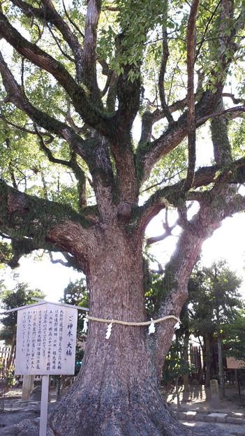 2018.1.3(兵庫/赤穂/大石邸-御神木)
