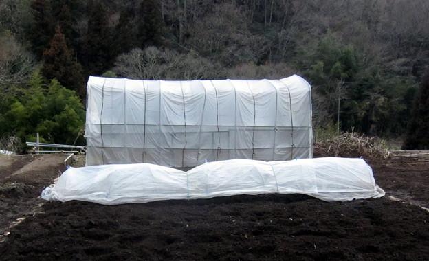 2018-02-15-豌豆ビニル