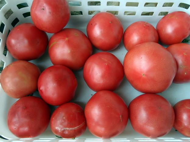 2018-06-18 トマト