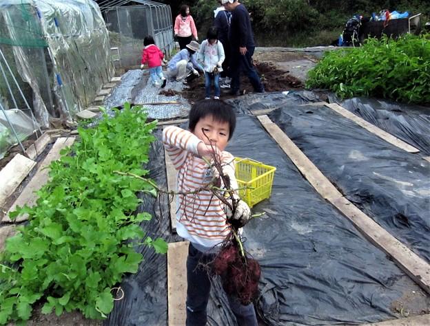 芋掘り-かずき-ちゃん (2)
