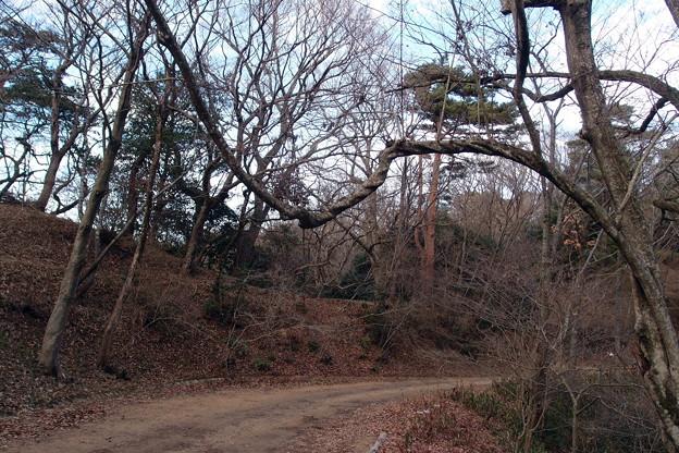 2019‐01-10ぶら下がりの木