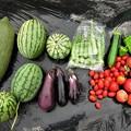 2019-08-19収穫