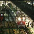Photos: ブルートレイン「富士」復活運行