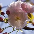 写真: 新宿御苑で見た花