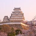 Photos: 明ける白鷺城