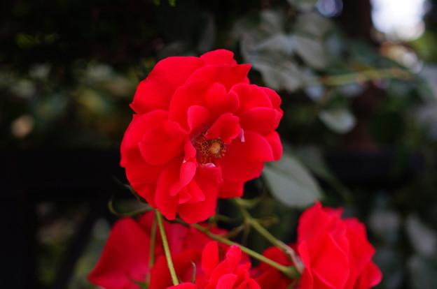 Photos: ご近所の庭先