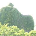 Photos: 神社の祠
