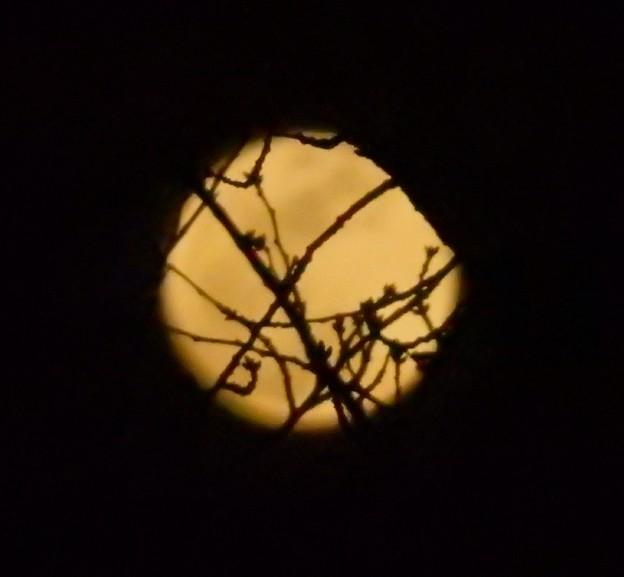 Photos: 月と桜