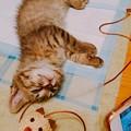 写真: 遊び疲れて・・