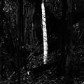 写真: 光る竹