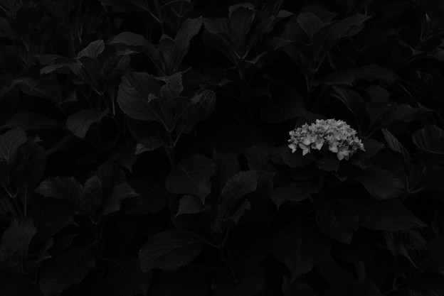 Lonely night…