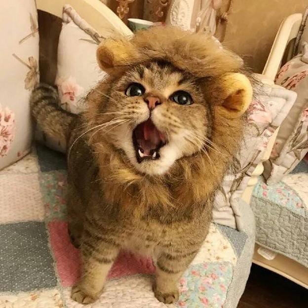 ライオンキング(実写版)