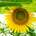 Photos: 避暑で咲く!