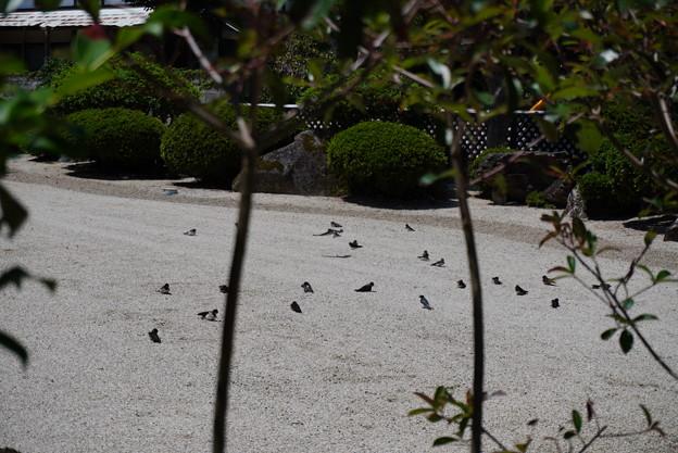 Photos: つばめの庭