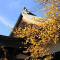 Photos: 180115_02_蝋梅・S18200(西方寺) (43)