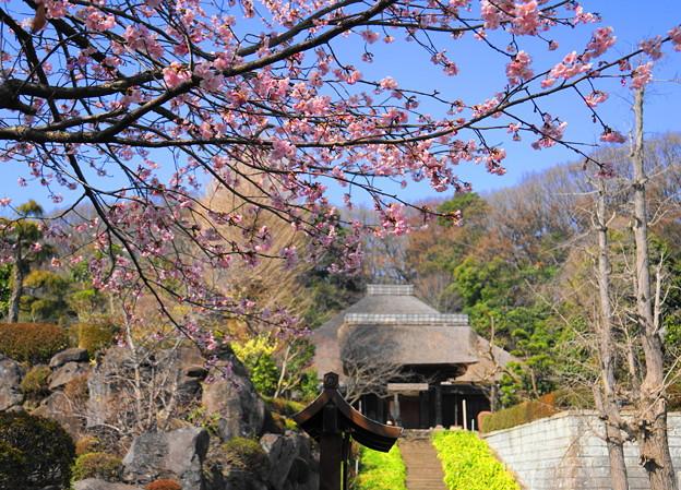 180314_01_中日桜・S18200・α60(西方寺) (15)