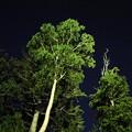 写真: 180714_12_この木が邪魔でした・S18200・α60(ヘブンス・そのはら)