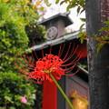 Photos: rs-180916_69_彼岸花・S18200・α60(常栄寺) (8)