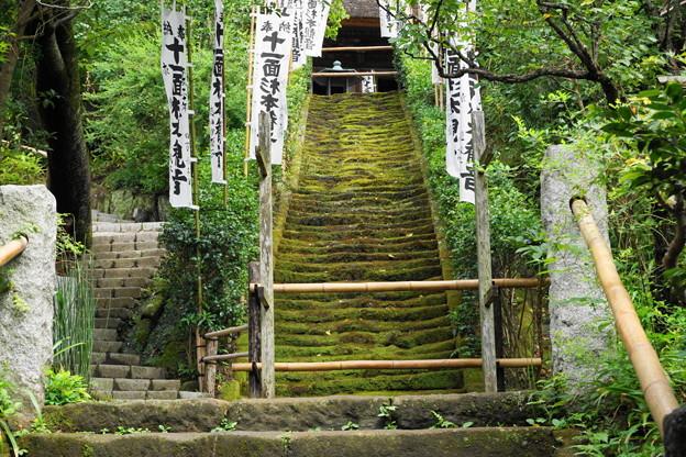 180911_60_苔の階段・S1650・α60(杉本寺)