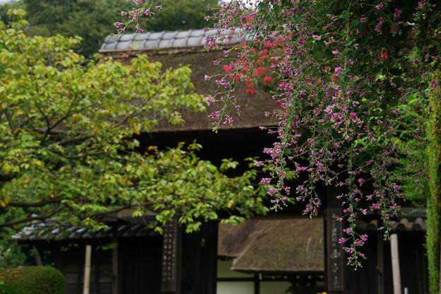 180919_06_萩の花・S18200・α60(西方寺)