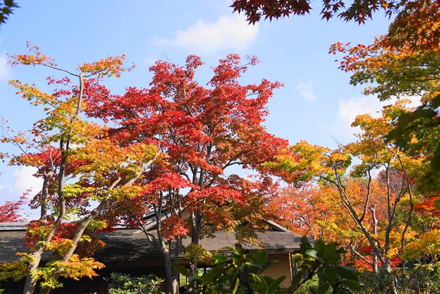 181108_06_日本庭園の様子・S18200・α60(昭和記念) (37)