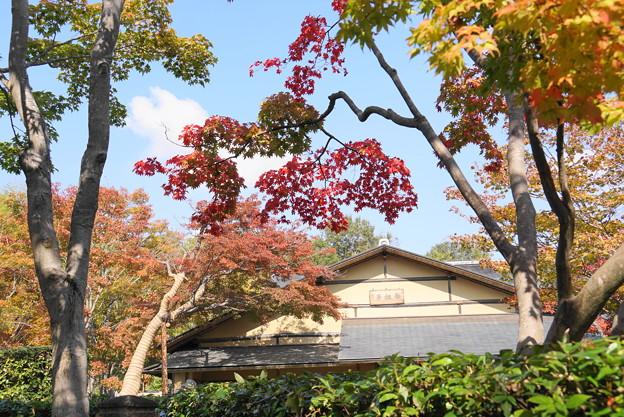 181108_06_日本庭園の様子・S18200・α60(昭和記念) (39)