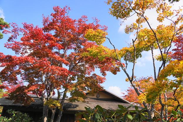 181108_06_日本庭園の様子・S18200・α60(昭和記念) (42)