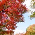 Photos: 181108_19_水鳥の池辺りの紅葉・S18200・α60(昭和記念) (11)