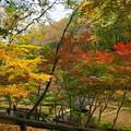 181120_03_公園の紅葉・S18200・α60(薬師池公園) (36)