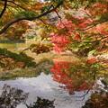 181120_01_公園の紅葉・S18200・α60(薬師池公園) (20)