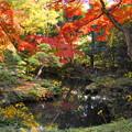181128_01_庭園の様子・S18200・α60(殿ヶ谷庭園) (25)