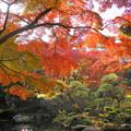 181128_01_庭園の様子・S18200・α60(殿ヶ谷庭園) (368)