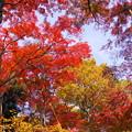 181128_01_庭園の様子・S18200・α60(殿ヶ谷庭園) (514)