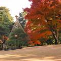 181128_01_庭園の様子・S18200・α60(殿ヶ谷庭園) (690)