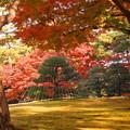 181128_01_庭園の様子・S18200・α60(殿ヶ谷庭園) (702)